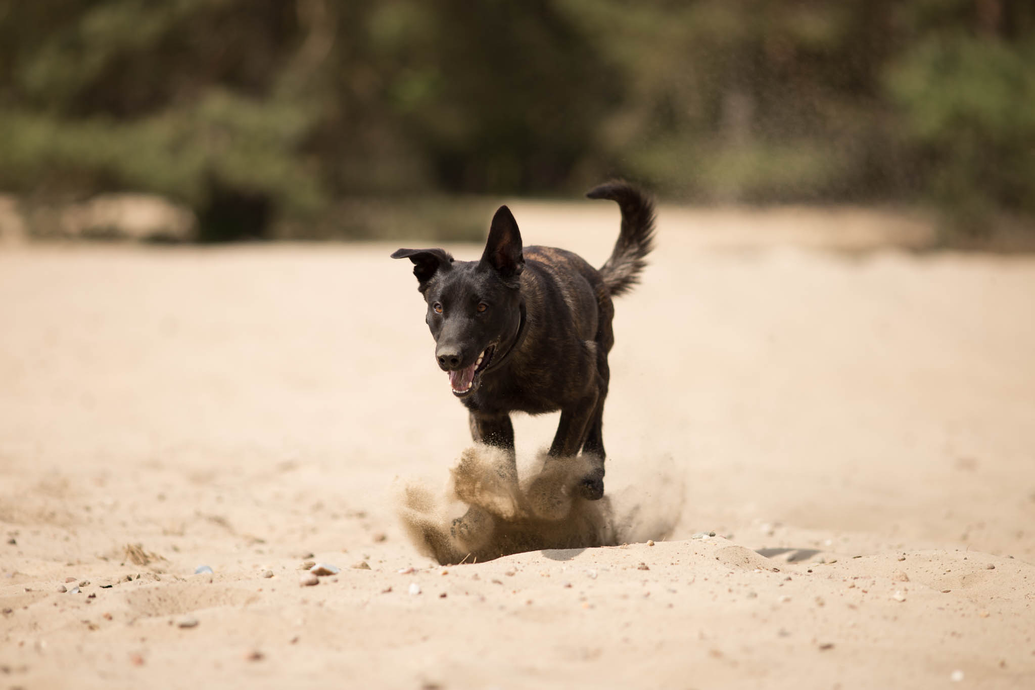 EF-200mm-f-2.8L-II-USM-Hund-Action-1